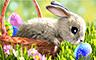 Claire Hart Case 43 - Easter Egg Hunt