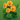 Solitaire Gardens Chat Icon