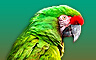 Claire Hart - Case 70, Part 1: Mystery of the Macaw - Monty the Magnifient Badge