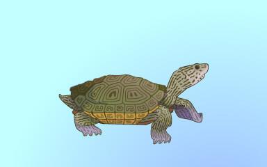 Quinn's Aquarium Mangrove Tank Part 3 Badge