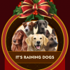 Save 25% on Dog Badge Collection